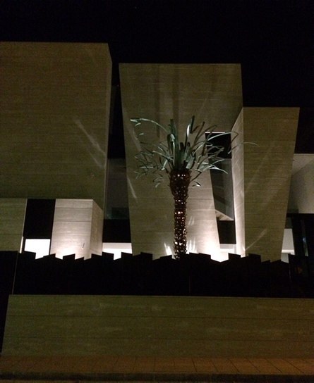 palmera Arquitectura MUHER